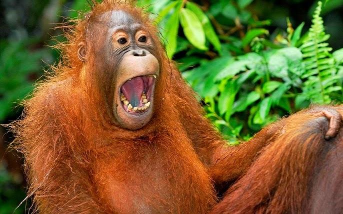 7 Manfaat Tertawa Bagi Kesehatan dan Kehidupan Sosial