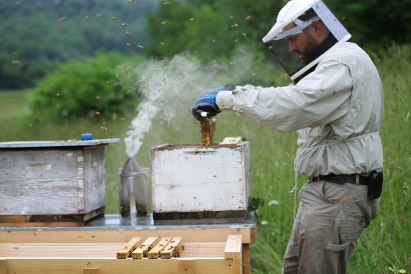 installing nucleus colony frames into top bar hive