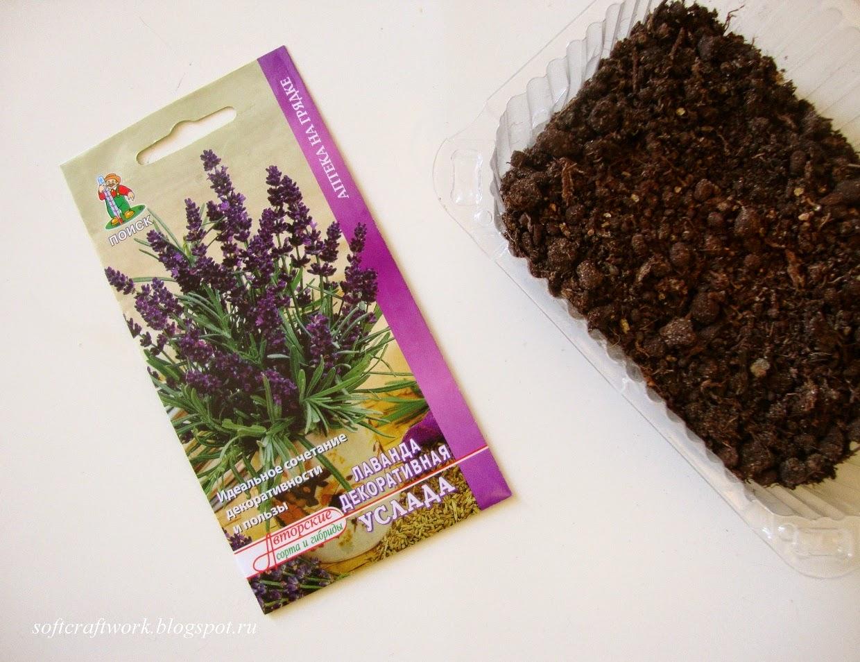Лаванда посадка и уход, выращивание из семян 41