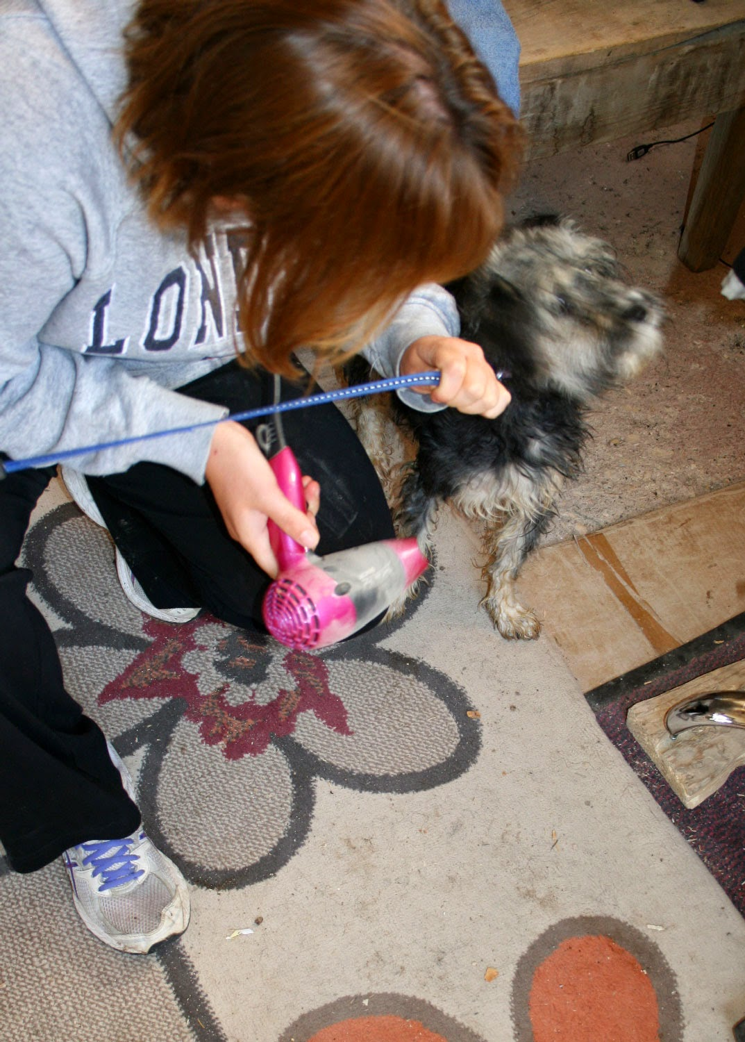 Blow drying a puppy
