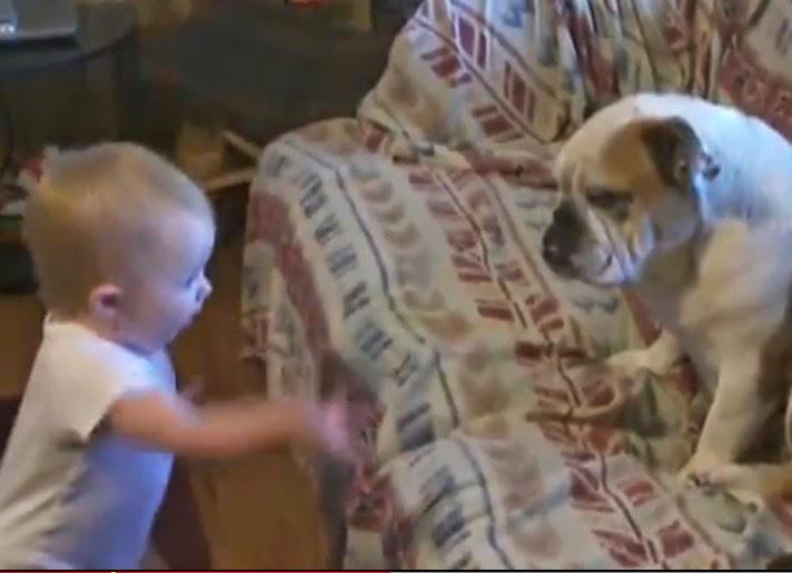 bebe discute con perro