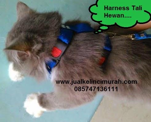 Harness hewan