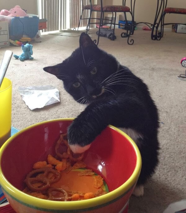 Funny cats - part 83 (40 pics + 10 gifs), cat pics, cat tries to steal food from bowl