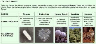 Clasificación de La Naturaleza