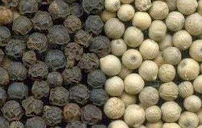 kandungan nutrisi dan manfaat lada merica bagi kesehatan