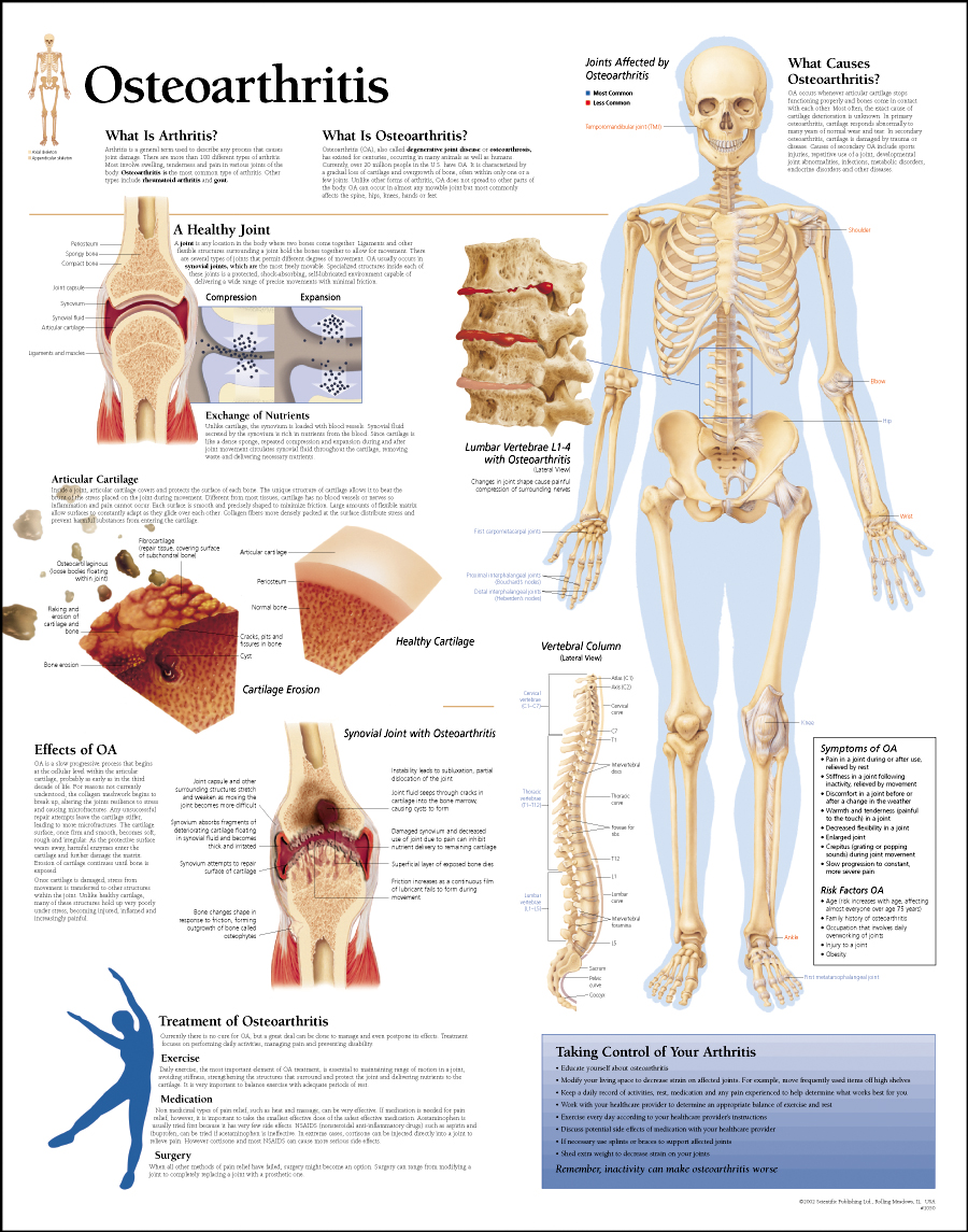 describe the principal bones in the human body Anatomy and physiology: bone tissue  the four principal types of bone cells are the following:  classify the bones of the body into the axial and appendicular .