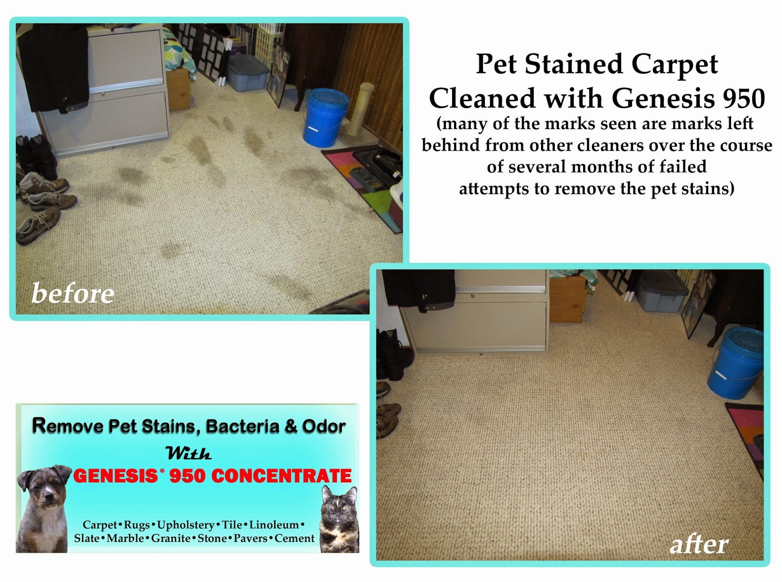 remove pet stains and odor