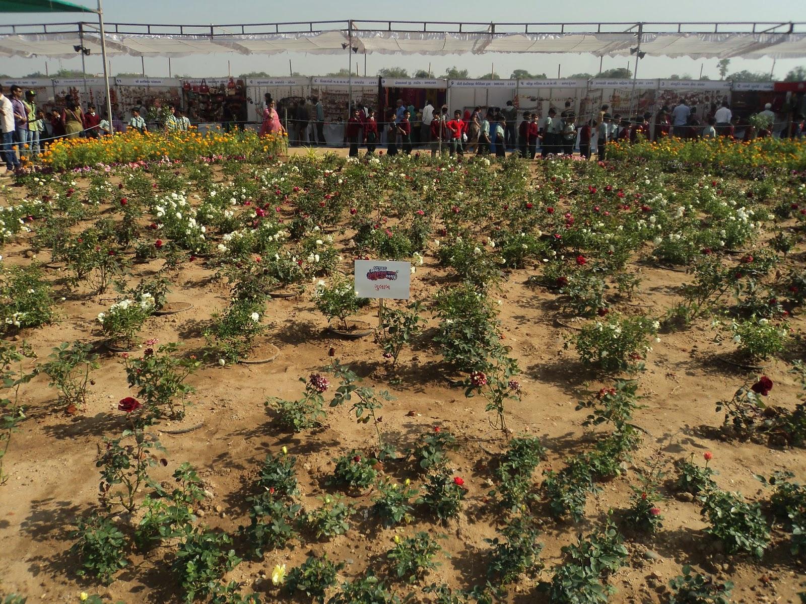 rose flower varieties