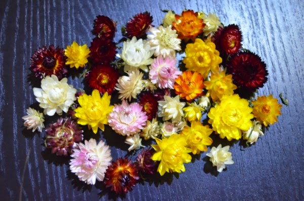 colourful dry flowers