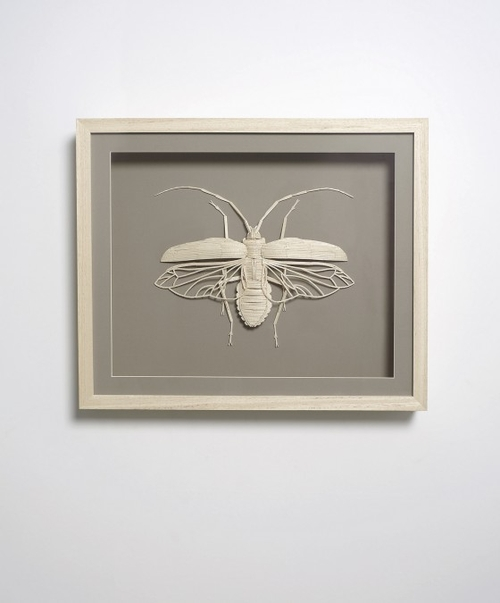 19-Stick-Insect-Kyle-Bean-Illustrator-Art-Director-who-makes-things-out-everything-www-designstack-co