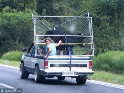 Images drôles et surprenantes Transport – Marchandise v32