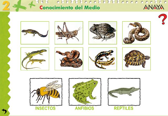 Dibujos de animales anfibios y reptiles - Imagui