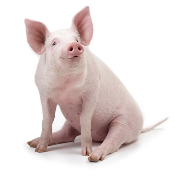 Madame anne aux fourneaux sandwich de r ti de porc mayonnaise l 39 chalote - Culture de l echalote ...