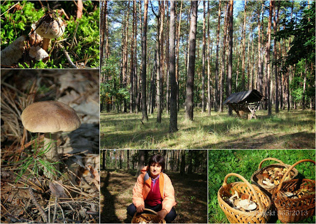 270/365 - Predsa som išla na huby do lesa