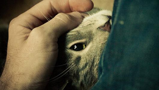 Изображение кошки к теме о мурлыкании