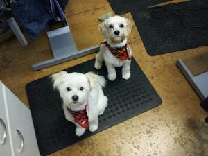 Hailey and Dillin