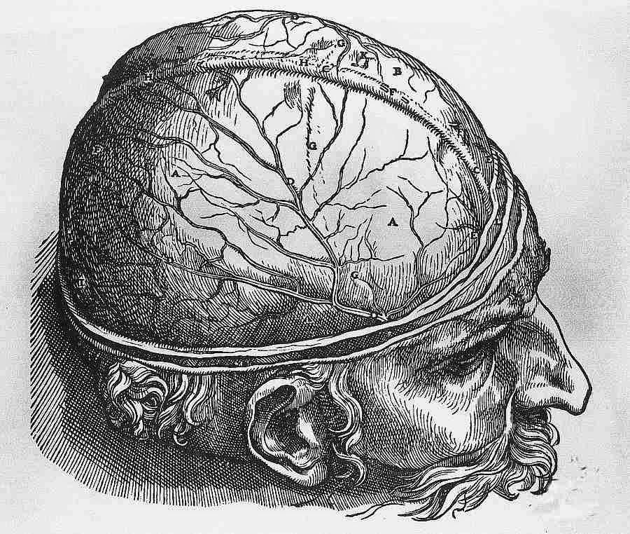 IRM scanner prise de sang schizophrénie psychiatrie