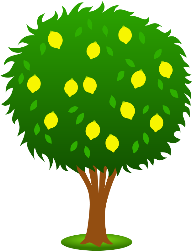 Gambar Pohon Jeruk Kartun Lucu Lemon Tree Cartoon Pictures Wallpaper