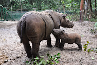 Sumatran Rhino Sanctuary-Adventure and Education - Way Kambas National Park