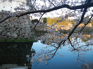 Castle moat and sakura