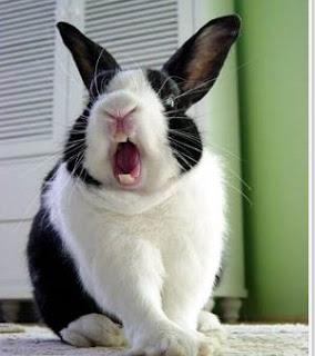 Ciri fisik kelinci yang sehat