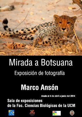 http://2.bp.blogspot.com/-n3Mv1031PYo/Uzl-bwRs4lI/AAAAAAAAADE/ICqYm7f2Lwc/s1600/cartel+bot1jpg.jpg