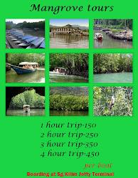 Mangrove tours