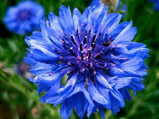 Flower free desktop wallpaper 0001