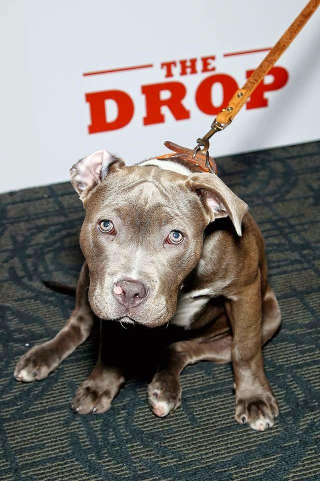 the drop rocco