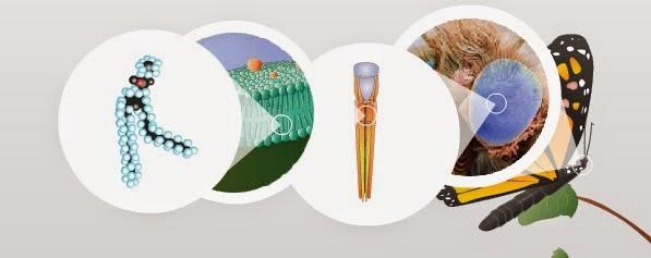 Quimica Orgánica BIO404: El Carbono en los seres vivos