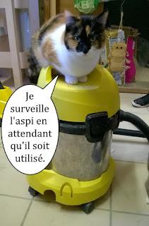 Une chatte sur un aspirateur.