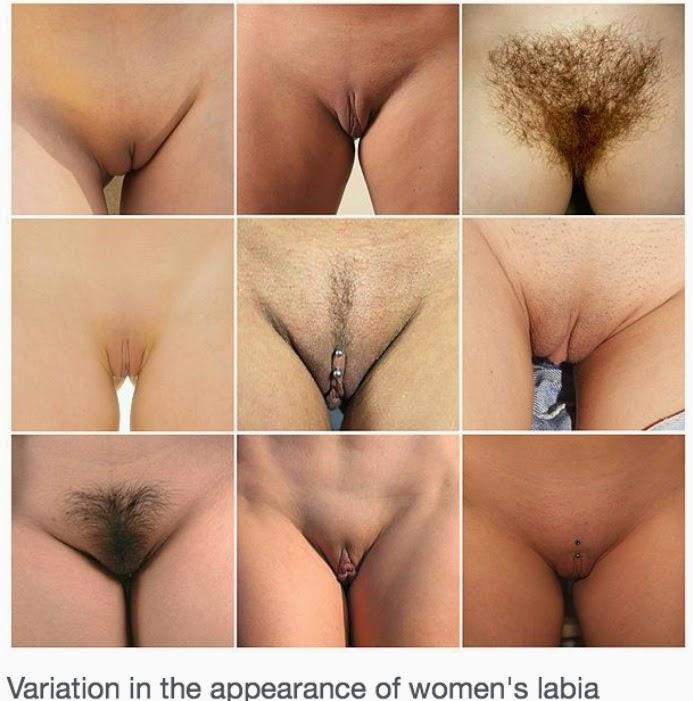 все виды вагин на фото