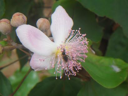 As mais belas flores brotam das frestas das rochas....