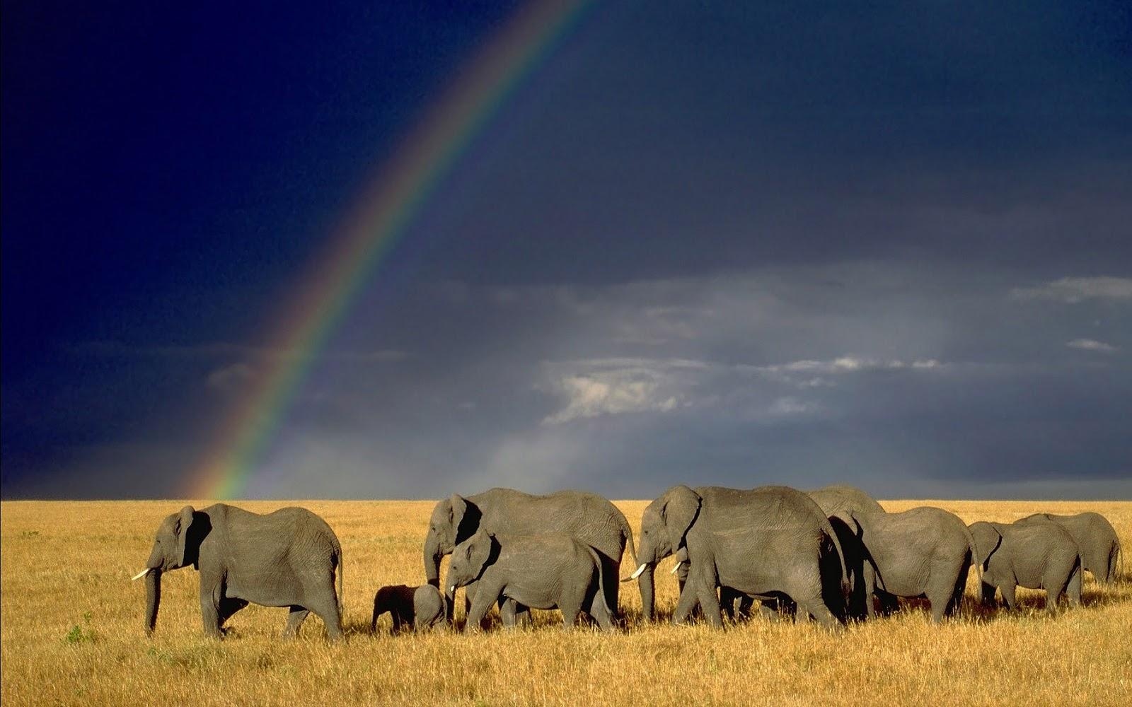 olifanten achtergronden bureaublad - photo #12