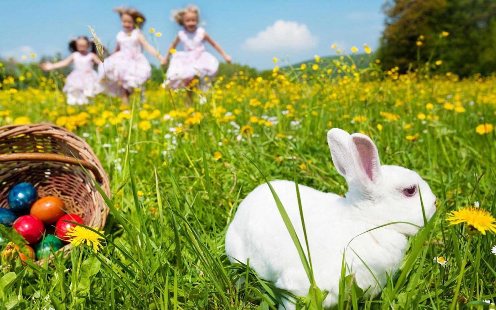 Великден, бяло зайче - HD Wallpaper
