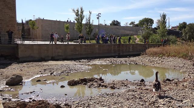 guadalquivir, río, lecho seco, puente romano, córdoba, españa, turismo, pasear, ribera, molino San Antonio, patos, gansos, ganso, oca, ansar, pato, malvasias, rocas, piedras