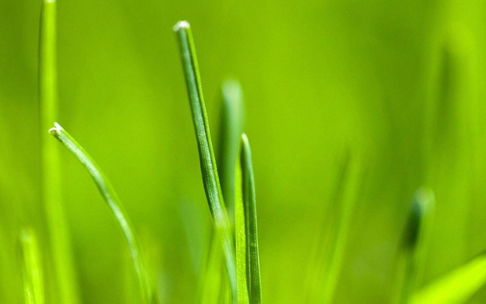 http://2.bp.blogspot.com/-n5TPKKIUYIw/Tjxh06CmDBI/AAAAAAAAIXw/iOzFnyKfrho/s1600/android-3.0-grass-wallpaper-wallpapers_HD_1920x1200.jpg