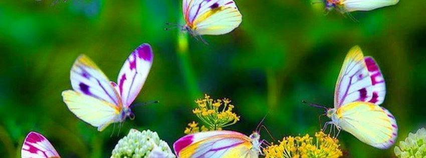 Photot de couverture facebook papillons exotiques