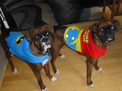 Batman, Wonder Woman, Dog, Superhero, Super Hero