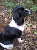 Becki, who taught me how to handle gundogs. Still with me everyday in spirit. RIP 09/04/12