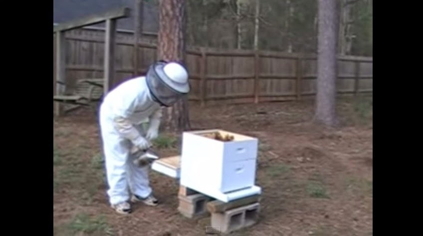 Video Checking Queen Bee 5 days after installing Bee Package.