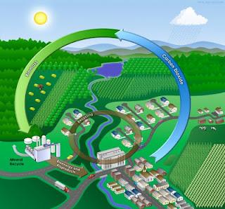 grafico de biomasa