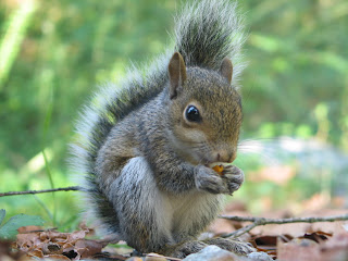 squirrel pets animal wallpaper