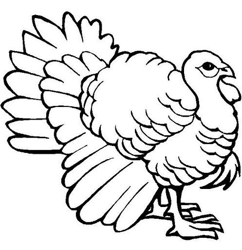 2 aves para colorear - Imagui