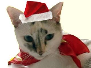 Gata Lili fantasiada de Mamãe Noel