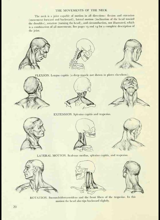 The Human Figure An Anatomy For Artists Ebooksart How To
