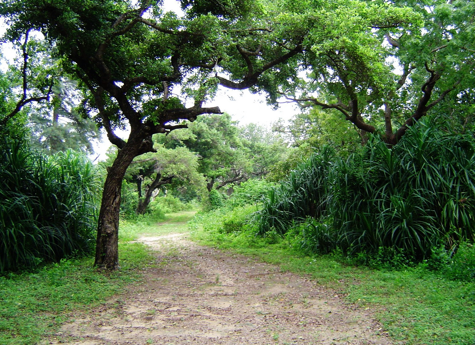 essay on forest reserves