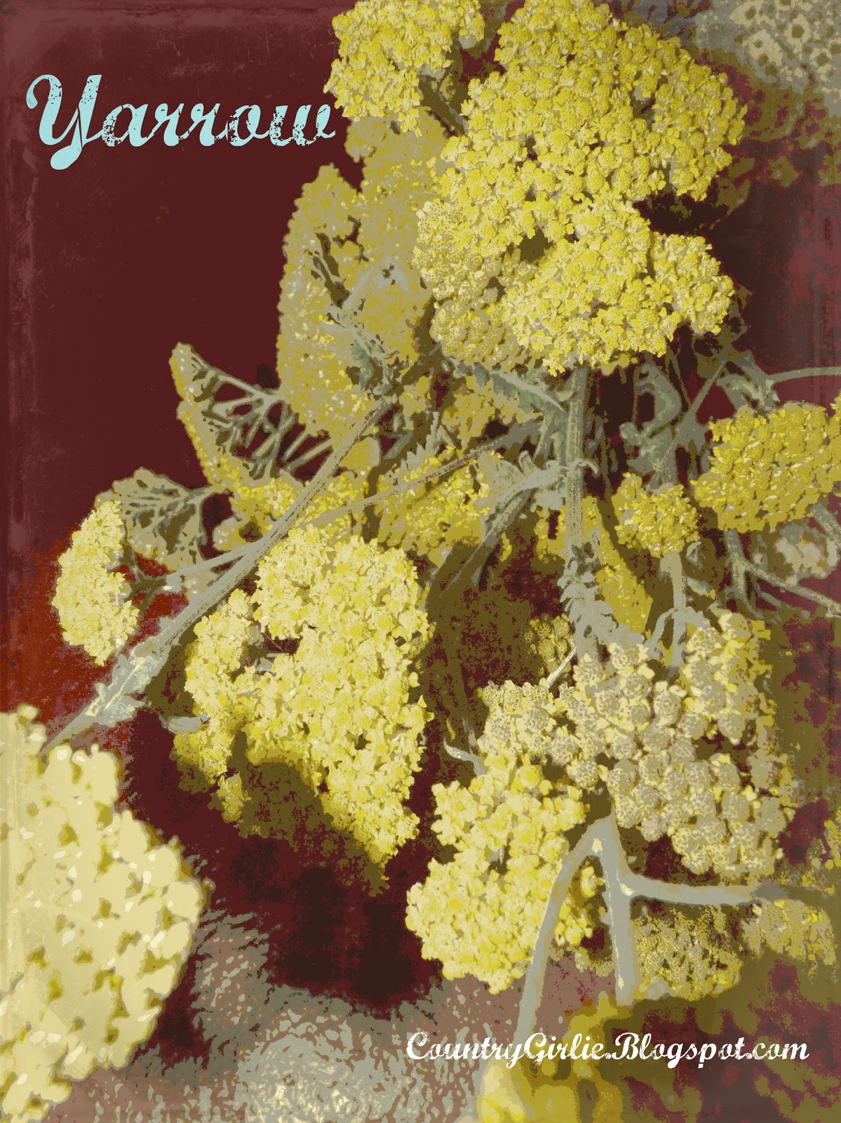 country girlie yarrow tea and other herbal tea recipes