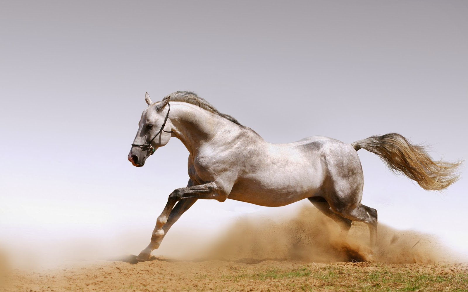 These Are Very Powerful And Stunning We Have Put Here Some Unique Beautiful Wallpapers Of Horses That Will Come Up To Your Taste Hopefully