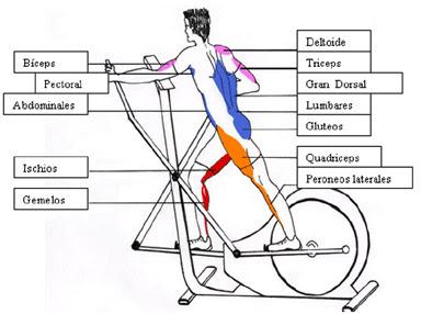 Madre Mia del Amor Hermoso: Bicicleta Elíptica